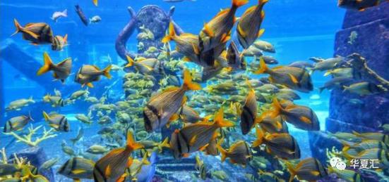 壁纸 海底 海底世界 海洋馆 水族馆 桌面 551_259