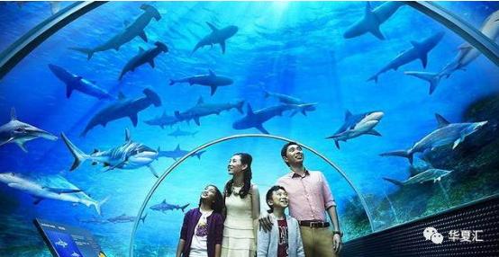 城海洋馆将依托海洋主题文化,全面融入海洋旅游文化,海洋科普教育文化